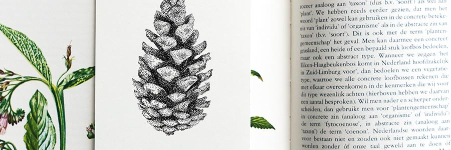Dennenappel - Mélisse Prints - Illustraties en ansichtkaarten van dieren en planten, flora en fauna