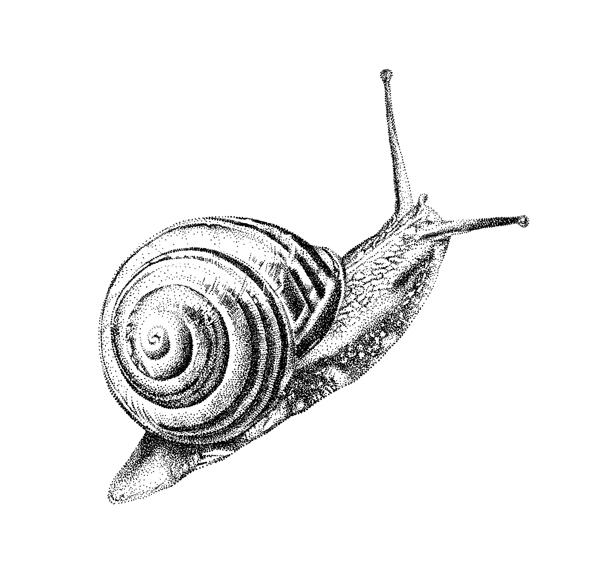 Slak - Mélisse Prints - Illustraties en ansichtkaarten van dieren en planten, flora en fauna