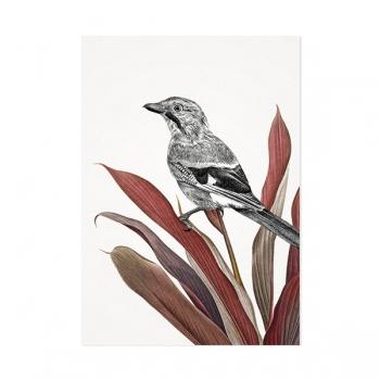 Vlaamse gaai vogel - Mélisse Prints - Illustraties en ansichtkaarten van dieren en planten, flora en fauna