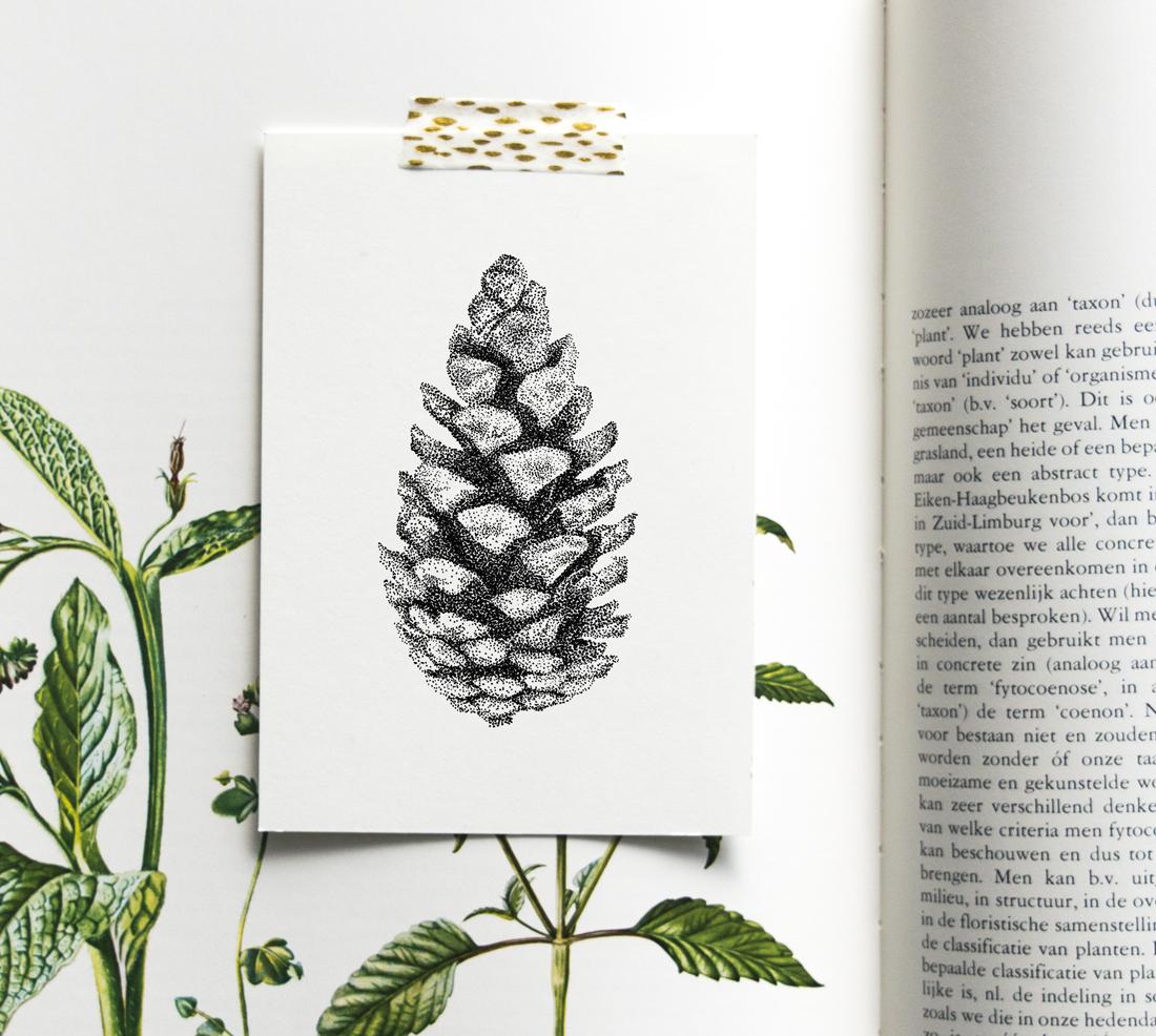 Dennenappel – Mélisse Prints – Illustraties en ansichtkaarten van dieren en planten, flora en fauna