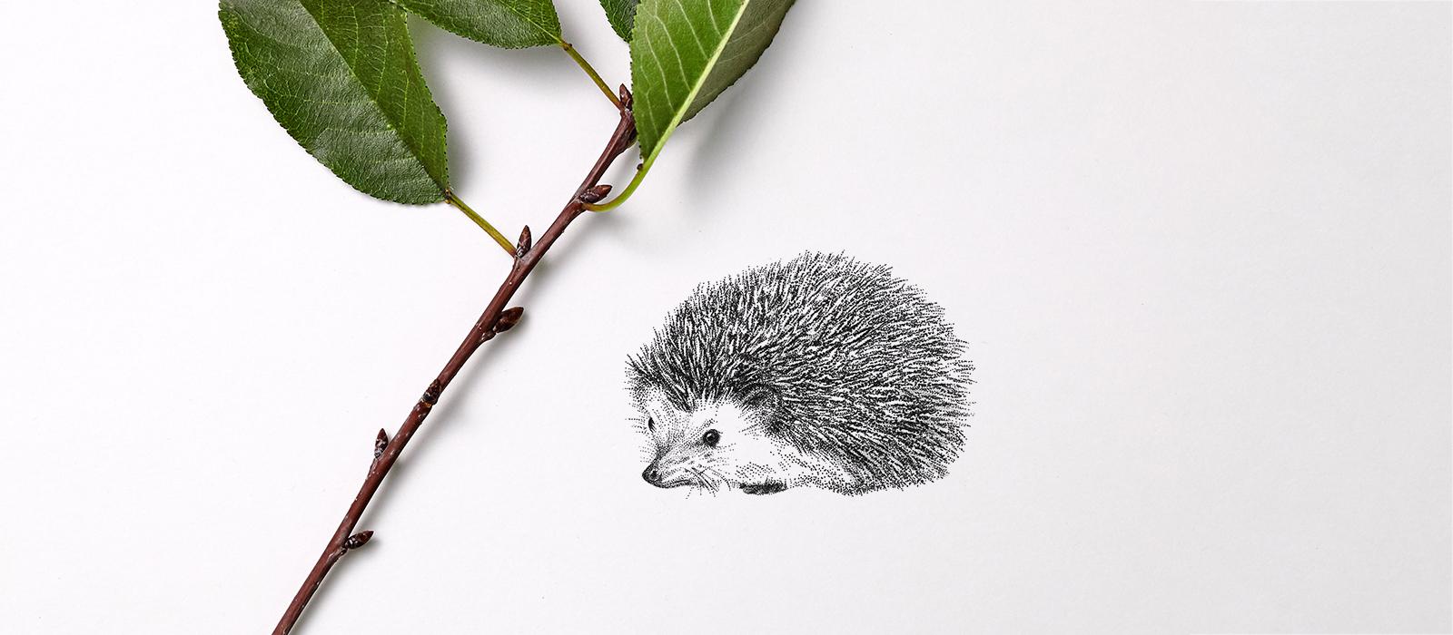 Egel – Mélisse Prints – Illustraties en ansichtkaarten van dieren en planten, flora en fauna