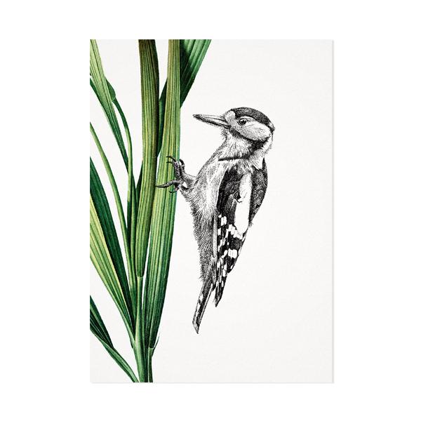 Grote bonte specht – Mélisse Prints – Illustraties en ansichtkaarten van dieren en planten, flora en fauna