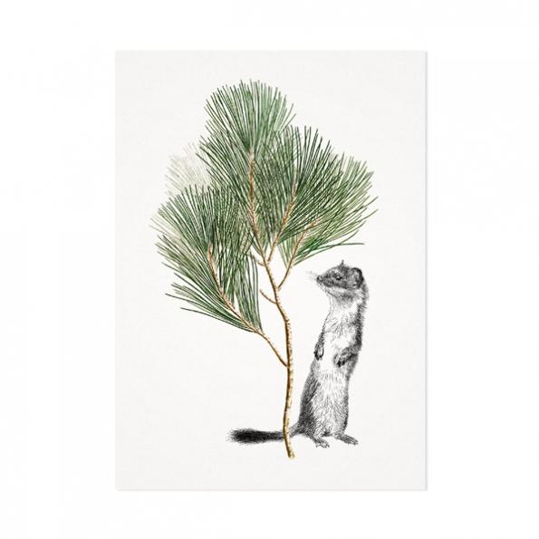 Hermelijn – Mélisse Prints – Illustraties en ansichtkaarten van dieren en planten, flora en fauna