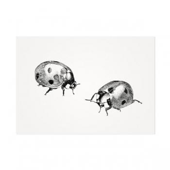 Lieveheersbeestjes – Mélisse Prints – Illustraties en ansichtkaarten van dieren en planten, flora en fauna