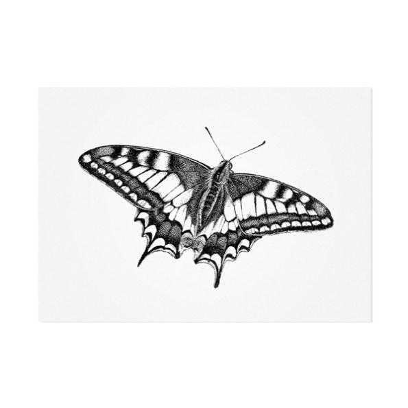 Vlinder – Mélisse Prints – Illustraties en ansichtkaarten van dieren en planten, flora en fauna
