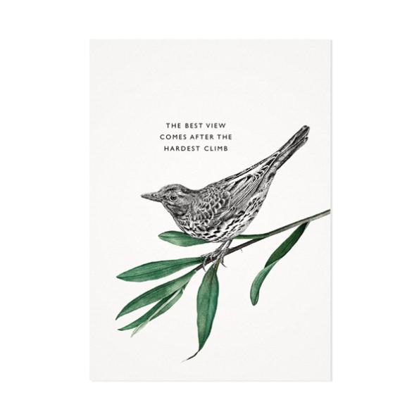 Zanglijster – Mélisse Prints – Illustraties en ansichtkaarten van dieren en planten, flora en fauna