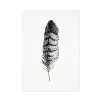 Veer buizerd – Mélisse Prints – Illustraties en ansichtkaarten van dieren en planten, flora en fauna
