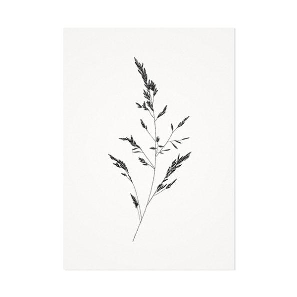 Beemdgras – Mélisse Prints – Illustraties en ansichtkaarten van dieren en planten, flora en fauna